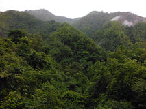 Misty Forest rural nos Himalayas mais baixos Foto de Stock