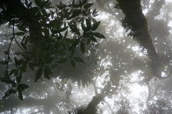 Misty forest scene. Looking up towards the sky in a misty forest scene - taken in Bali, Indonesia Royalty Free Stock Image