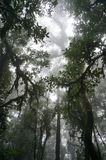 Misty forest scene. Looking up towards the sky in a misty forest scene - taken in Bali, Indonesia Stock Images