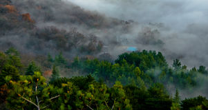 Misty forest scenic. Aerial view of mist covered forest Stock Images