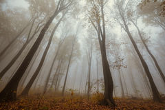Misty forest shoot at wide angle Stock Photo