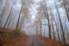 Misty forest shoot at wide angle Stock Photos