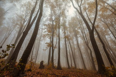Misty forest shoot at wide angle Stock Images
