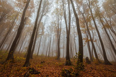 Misty forest shoot at wide angle Royalty Free Stock Images