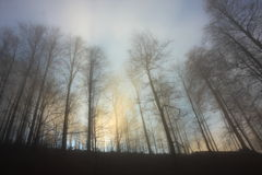 Misty forest with diffuse light Royalty Free Stock Image