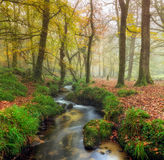 Misty Forest Stock Images