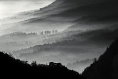 Misty forest. Stunning image, showing many layers of pine tree forest on a misty autumn morning Stock Photos