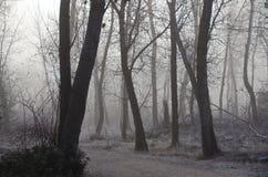 Misty Forest su una mattina silenziosa fredda immagine stock libera da diritti