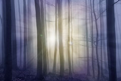 Misty forest with sun beams. Toned stock photography