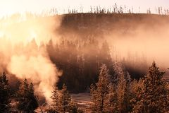 Misty forest with sunrise Yellowstone Royalty Free Stock Photos