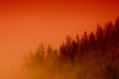 Misty forest at sunset Stock Photo