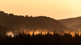 Misty forest at sunset Royalty Free Stock Images