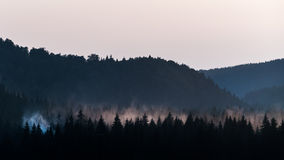 Misty forest at sunset Stock Images