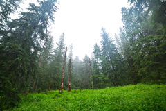 Misty forest in Tatra mountains Royalty Free Stock Images