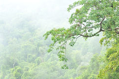 Misty forest, Thailand Royalty Free Stock Images