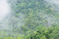 Misty forest, Thailand Royalty Free Stock Photo