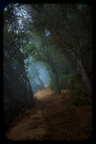 Misty Forest Trail. Big Sur Redwood Forest Misty Trail stock images