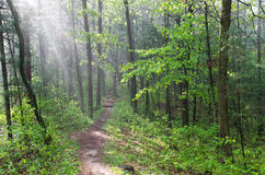 Misty Forest Trail at Castle Mound. Lush green misty forest trail in castle mound pine forest state natural area outside black river falls wisconsin stock photos