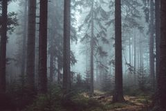 Misty Forest Trees Royalty Free Stock Photo