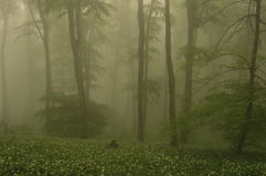 Misty forest trees Stock Photography