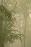 Misty forest trees Royalty Free Stock Photography