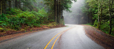 Misty Forest Two Lane Highway Rural Country Coastal Road Stock Images