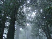 Misty Forest van het Nationale Park van Doi Intanon royalty-vrije stock fotografie
