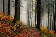 misty forest walk in autumn Royalty Free Stock Photo