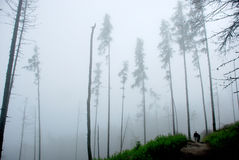 Misty forest walking Royalty Free Stock Image