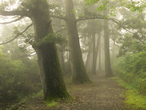 Misty forest way in Japan Stock Images
