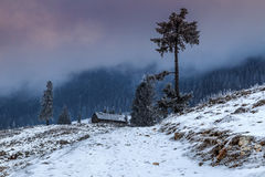 Misty forest and winter landscape,Carpathians,Romania,Europe Royalty Free Stock Image