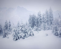 Misty forest in winter in mountains Royalty Free Stock Photos