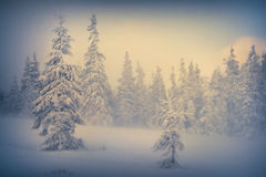 Misty forest in winter in the mountains. Royalty Free Stock Image