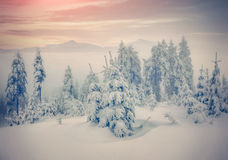 Misty forest in the winter mountains. Stock Photos