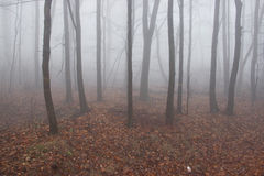 Misty Forest in Winter Royalty Free Stock Images