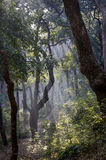 Misty Forest With The Rising Sun. Stock Photos