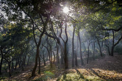 Misty Forest With The Rising Sun. Royalty Free Stock Images
