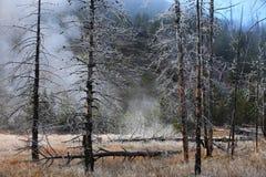 Misty forest  Yellowstone Wyoming, United States. Royalty Free Stock Photo