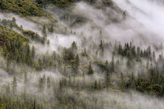 Misty Forest, Yosemite Royalty Free Stock Photography