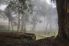 Misty forest - Zomba Royalty Free Stock Images