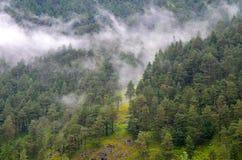 Misty Forrest från avstånd Arkivfoto