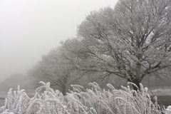 Misty & frosty morning in forest. Misty & frosty morning in Newland`s Corner, Guildford stock image