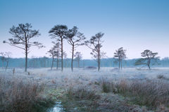 Misty frosty morning on marsh Stock Photography