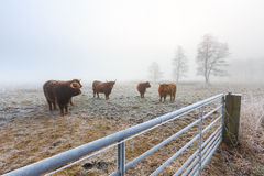 Misty frozen landscape of farmland in winter time Stock Photo