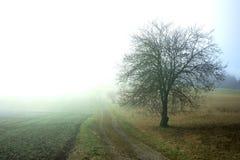Misty Glowing Farm Road met Boom royalty-vrije stock fotografie