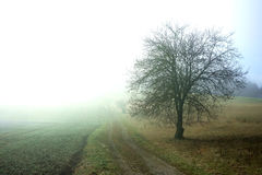 Misty Glowing Farm Road mit Baum Lizenzfreie Stockfotografie