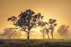 Misty Golden Morning in South Australia stock photography