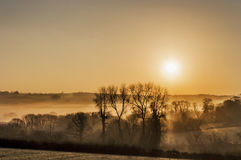 golden sunrise with mist Stock Photo