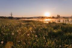 Misty Golden Sunrise Reflecting au-dessus de pissenlit a couvert les prés a image libre de droits