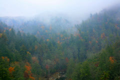 Misty Gorge. Colorful Autumn Trees in the Linville Gorge stock image